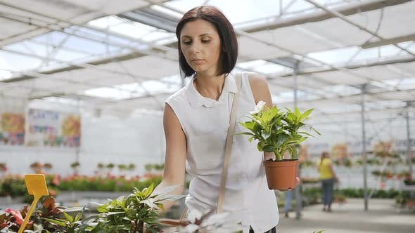 Thumbnail for Brunette Girl is Dressed in a White Shirt Holding a Flower Vase in His Hands