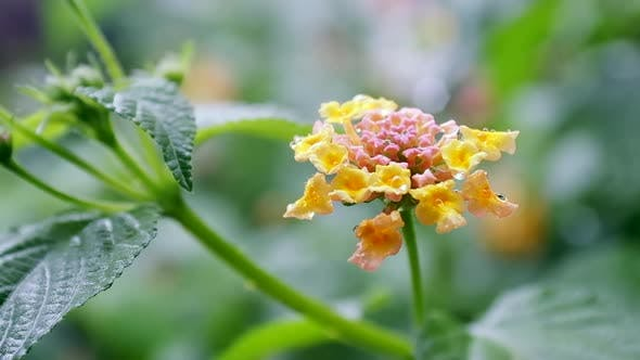 Thumbnail for Close up view of rain drops falling on flower