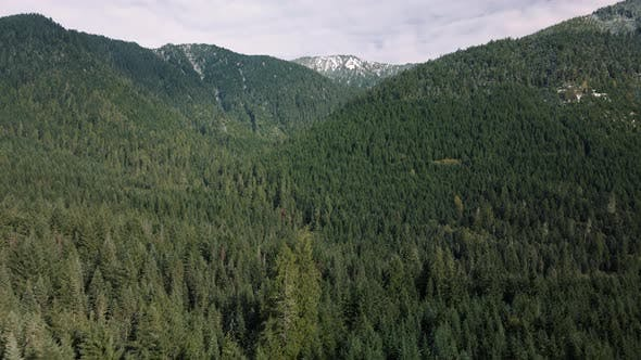 Aerial Reveal Of Dense Forest Trees Deep In Mountain Backcountry