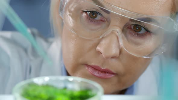 Thumbnail for Female Researcher Cultivating Cell Colony