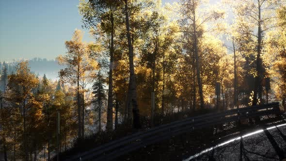 Thumbnail for Road in the Forest and the Sun Shining