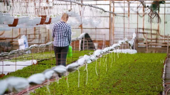 Thumbnail for Weibliche Bauern Bewässerung Pflanzen in Greehnouse
