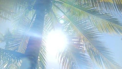 Sun Peaking Through A Tall Palm Tree In The Caribbean