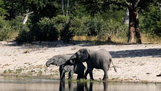 Thumbnail for African elephant, Bwabwata Namibia, Africa safari wildlife