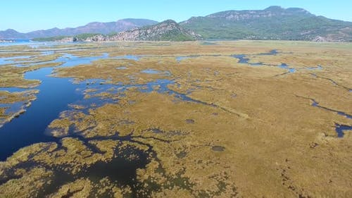 Aerial Swamp Wetland and Lake Next to Reed Delta by Sea