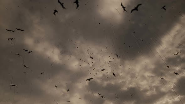 Thumbnail for Birds Flying and Rain Background
