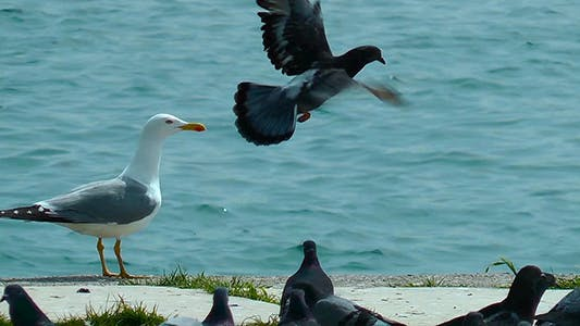 Seagulls and Pigeons near the Sea