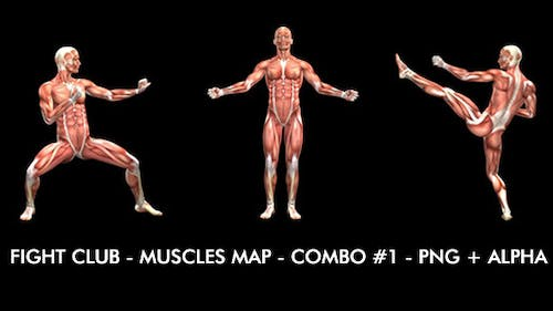 Fight Club - Muscles Map - Combo #1