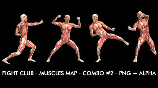 Thumbnail for Fight Club - Muscles Map - Combo #2
