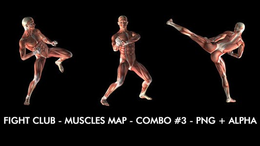 Thumbnail for Fight Club - Muscles Map - Combo #3