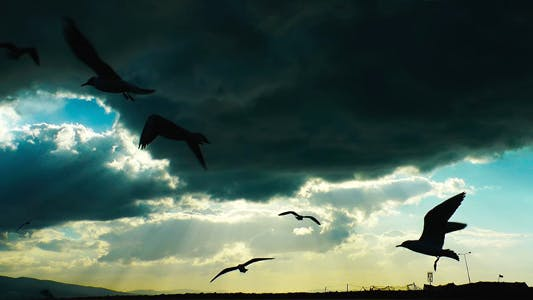 Seagulls Flying Silhouette