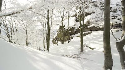 Snowcovered Forest in Winter