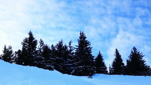 Winter Trees Under Snow. Winter in Mountains. Ukraine Carpathians Dragobrat