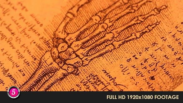 Thumbnail for Anatomy Drawings 9