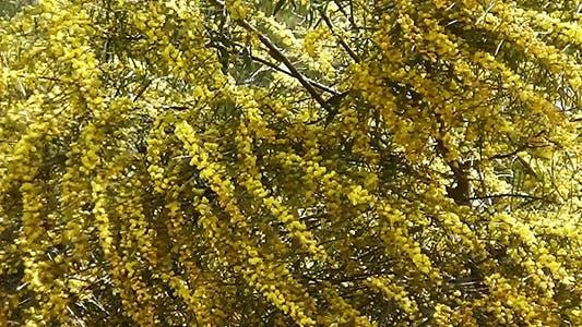 Thumbnail for Flower Tree