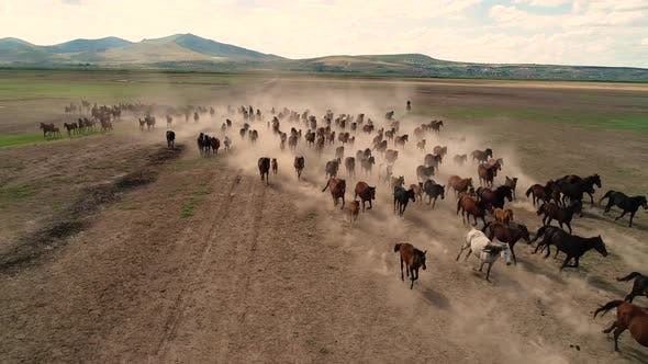 Thumbnail for Horses Running Cappadocia