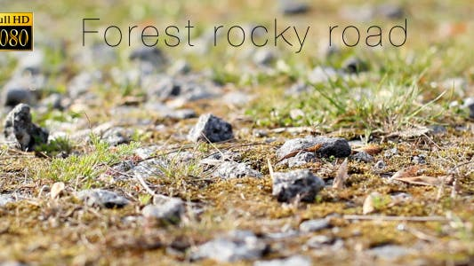 Cover Image for Forest Rocky Road