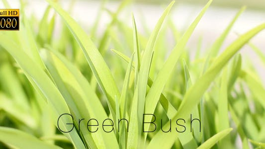 Cover Image for Green Bush 4