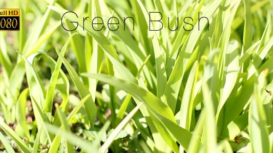 Thumbnail for Green Bush 5