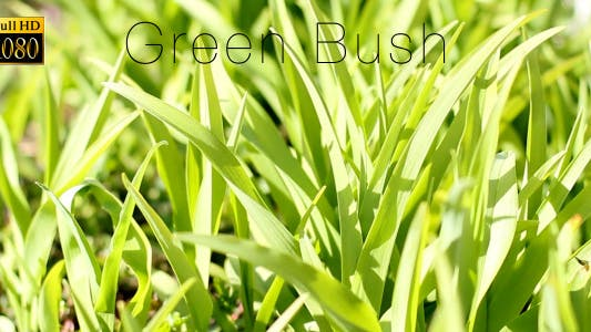 Cover Image for Green Bush 6