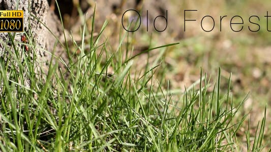 Thumbnail for Old Forest 6