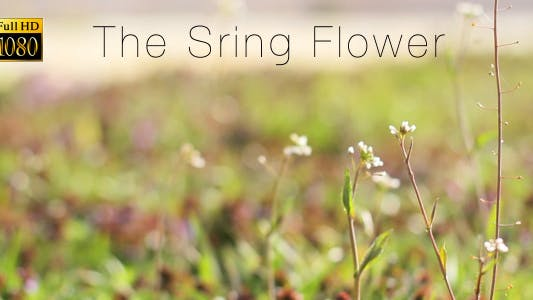 Thumbnail for The Sring Flower 2