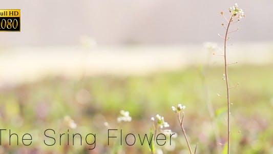 Thumbnail for The Sring Flower 3