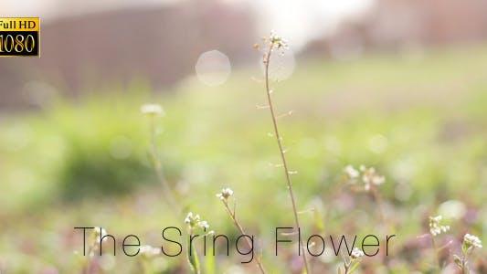 Thumbnail for The Sring Flower 5