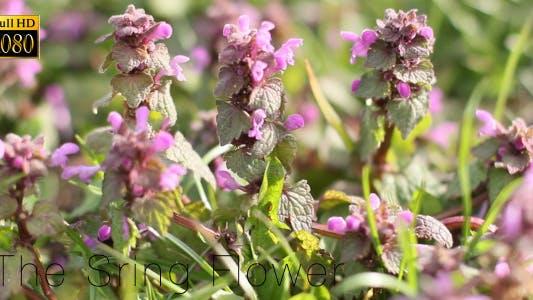 Thumbnail for The Sring Flower 6
