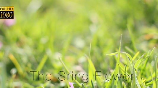 Thumbnail for The Sring Flower 7