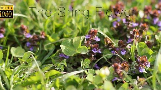 Thumbnail for The Sring Flower 8