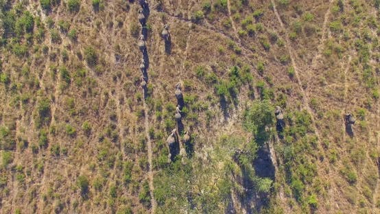 Thumbnail for Aerial drone view of a herd of elephants wild animals in a safari in Africa plains