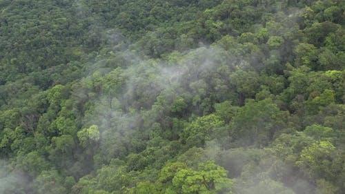 Drone aerial video - Vegetation