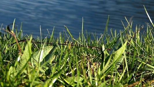Thumbnail for Grass and Water