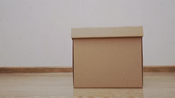 Thumbnail for Cute Ginger Cat Is Leaving Carton Box. Fluffy Pet Is Jumping Out Its Hiding Place.