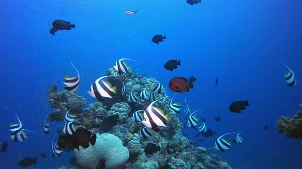 Unterwasser-tropisches Seascape Riff