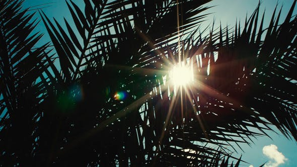 Thumbnail for Sun Playing in Palm Leaves