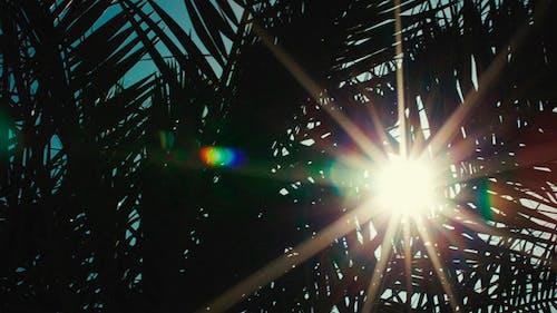 Tropische Sonne