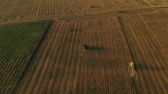 Thumbnail for Running Harvesters At Sunset