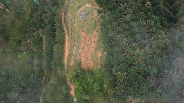 Aerial top down view oil palm estate