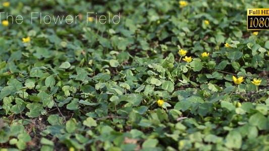 Thumbnail for The Flower Field 2