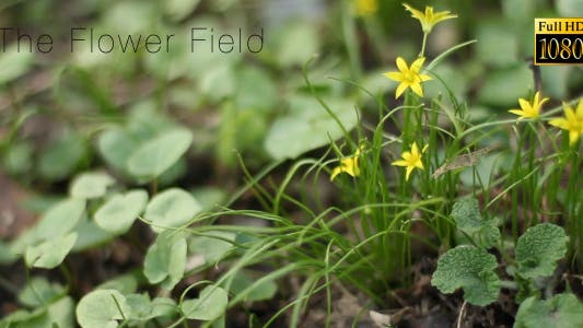 Thumbnail for The Flower Field 7