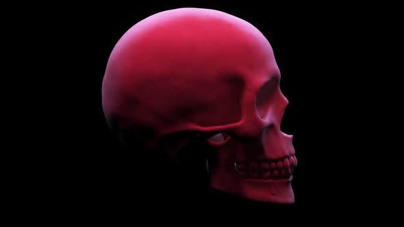 Thumbnail for Rotating Skull