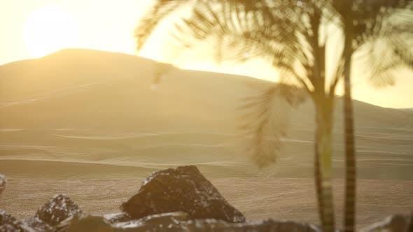Thumbnail for Palmen in der Wüste bei Sonnenuntergang