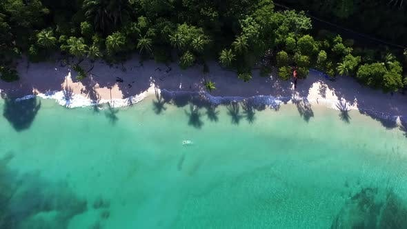 Thumbnail for Virgin Unspoiled Caribbean Tropical White Sandy Beach Aerial Drone View