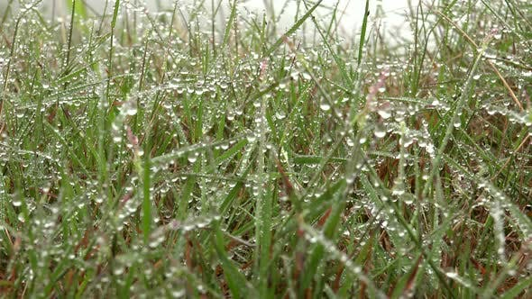 Thumbnail for Wonderful Water Dew Droplets on Mixed Wild Grassland Plants