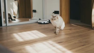 Domestic Cat Walking Home in Contemporary Interior in Sunlight