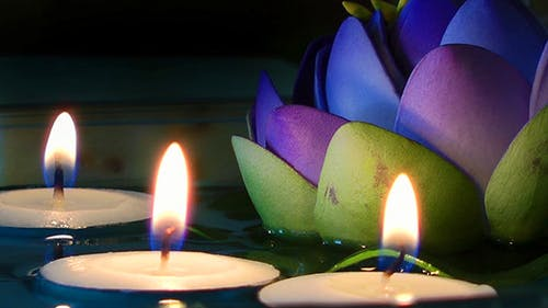 Candles and Waterlily