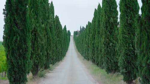 Tuscan Road with Green Trees on the Sides
