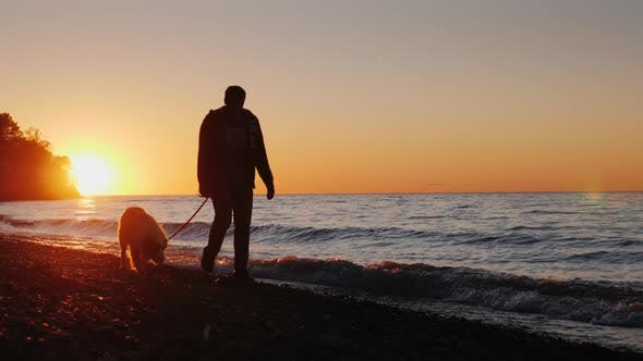 Cover Image for A Lonely Man Walks with a Dog Near the Lake or the Sea at Sunset